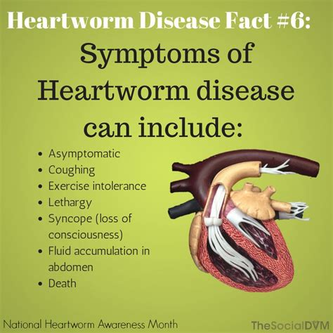 heartworm treatment 1000 images about heartworm on pinterest facts cats and for dogs