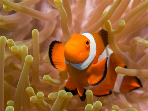 Meet our Creatures | SEA LIFE Bray Aquarium