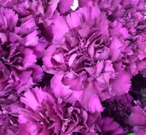 bulk carnations carnations sunglow flowers