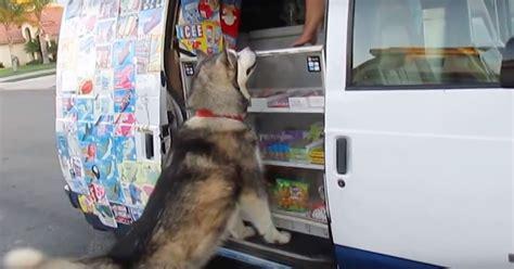 dog hears ice cream truck coming yells ice cream