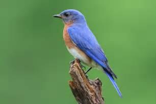 floor and decor store hours bluebirds nesting in your yard blain 39 s farm fleet