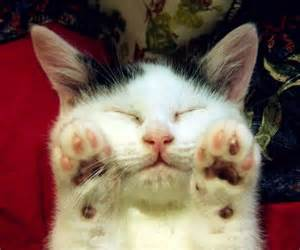 Cute Sleeping Kitten with Paws Up