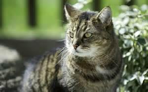 pet cat pet cat wallpaper 43515
