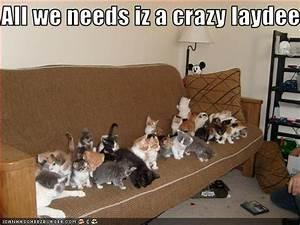Go Dogs Go All We Needs Iz A Crazy Laydee Cheezburger Funny Memes