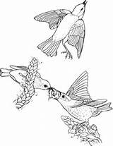 Eastern Coloring Bluebird Birds Bird Drawing Pages Printable Flying Getdrawings Supercoloring Categories sketch template