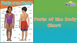 Best Human Body Chart - Scientific Poster- Body Parts Diagram