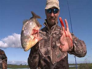 Pin on fishing australia