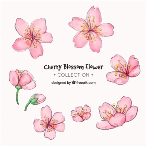 foto de Coleção de flor de cerejeira em estilo aquarela Baixar