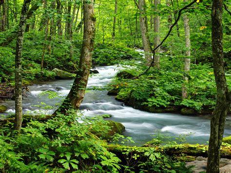green dense vegetation  trees river oirase japan