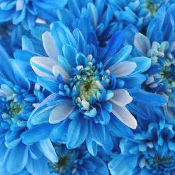 baby s breath boutonniere electric blue flowers