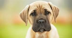 heartworm disease dogs