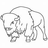 Bison Coloring Buffalo Drawings Animal Drawing Animals Printable Cartoon Sketch Simple Draw Template Bestcoloringpagesforkids Thecolor Tattoo Wild General Colour Wheeler sketch template