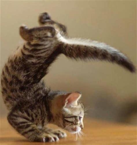 yoga masters animal edition  pics