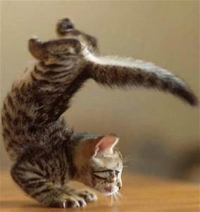 Yoga Masters Animal Edition 28 Pics