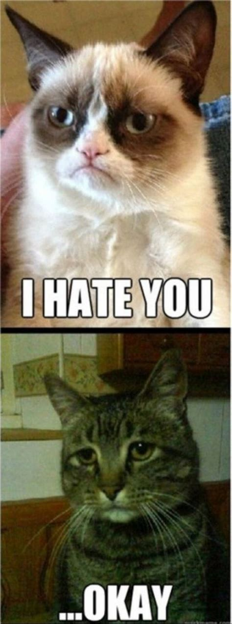Depressed Cat Meme - depressed memes image memes at relatably com