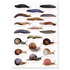 discount flowers slugs and snails identification postcard