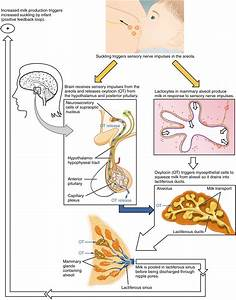 Signal Transduction And Hormones