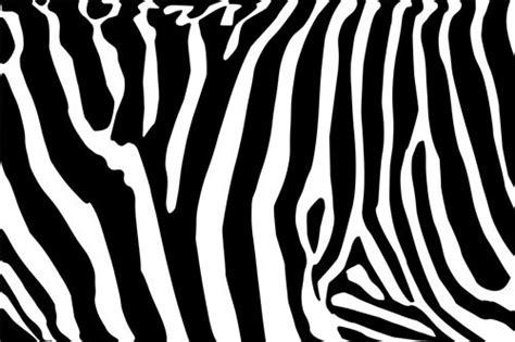 home design bakero stick zebra pink black wall border