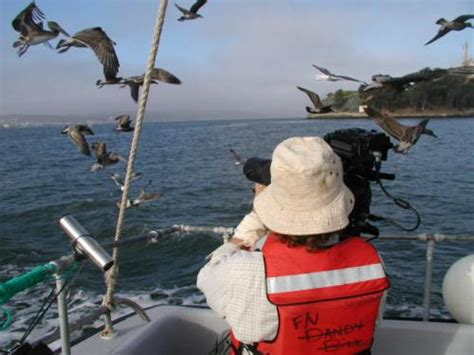 Pelican Bay Boat Rentals by San Francisco Bay Boat Rental Marine Services Charter