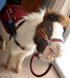 horse animals eye miniature horses seeing service illinois yawning dog dogs mini guide assistance training job allow pony tonto pack