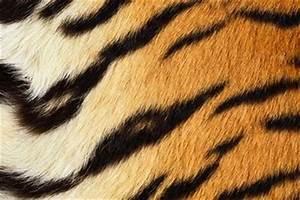Download 1600x1200 Tiger Skin Patter Wallpapers Desktop ...