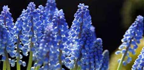 Lieblingsfarbe Blau? Dann Brauchen Sie Diese Blumen