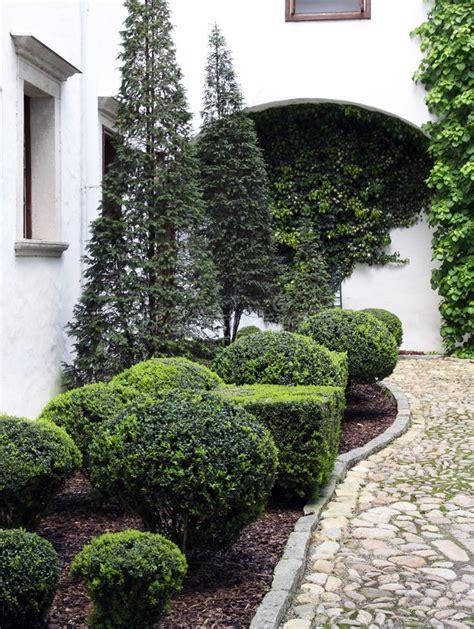 arbusti ornamentali da giardino arbusti e conifere ornamentali immagine stock immagine
