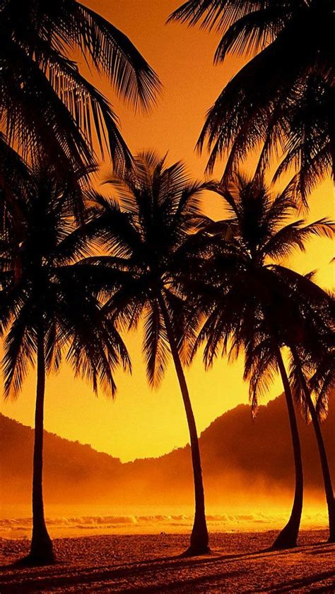 glowing tropical sunset iphone wallpaper iphone