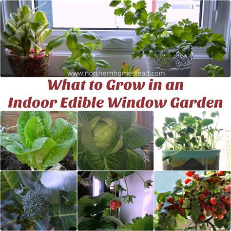 what to grow in a garden what to grow in an indoor edible window garden northern