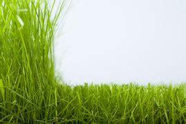Wie Pflege Ich Meinen Rasen by Fr 252 Hjahrspflege Rasen Gartengestaltung In Und Um