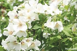 Wann Pfingstrosen Schneiden : rosen schneiden herbst rosen schneiden im herbst ist das ratsam rosen richtig schneiden rosen ~ Frokenaadalensverden.com Haus und Dekorationen