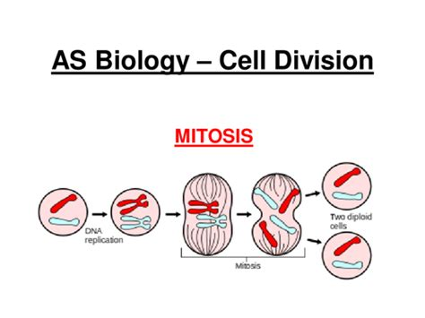 aqa  biology cell division mitosis  jam
