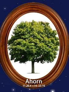 Baumhoroskop Berechnen : das gro e baum horoskopahorn 11 bis 20 4 14 bis 23 ~ Themetempest.com Abrechnung