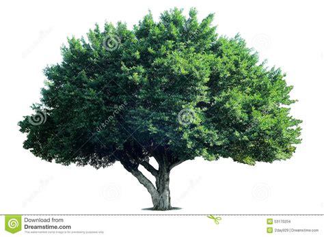 Tree Of Images Isolate Tree Stock Photo Image 53170204