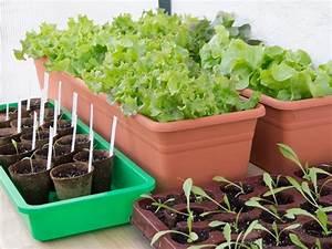 Tomaten Wann Pflanzen : gem se vorziehen friedrichs gartenjahr auss en pflanzen gie en und genie en ~ Frokenaadalensverden.com Haus und Dekorationen