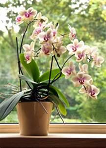 Latest Windows Updates Orchids Like Indirect Sunlight