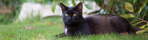 Katzen Aus Dem Garten Vertreiben  Kammerjäger Ratgeber