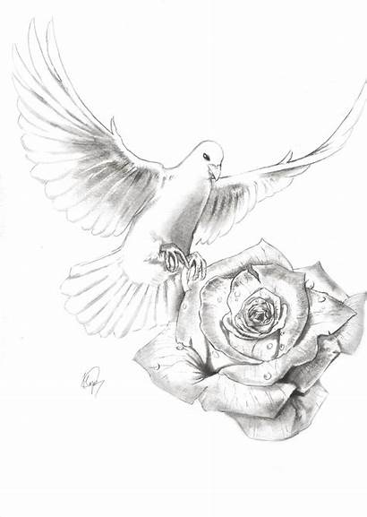 Dove Drawing Rose Tattoo Drawings Doves Realistic