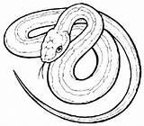 Snake Coloring Garter Drawing Printable Pokemon Cartoon Snakes Tree Drawings Animal sketch template