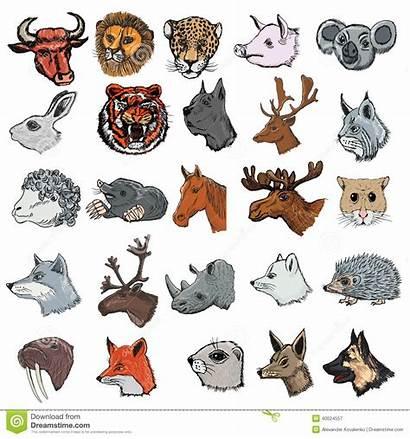 Animals Different Kinds Mammals Illustrations Mammal