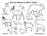 Coloring Animals Tundra Getcolorings Printable Canadian sketch template