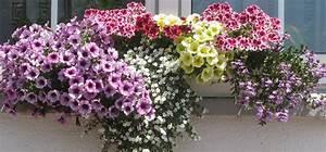 Wann Balkon Bepflanzen : blumen pflanzen balkon wann blumen dekoration ideen ~ Frokenaadalensverden.com Haus und Dekorationen