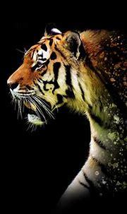 1920x1080 Tiger Abstract 5k Laptop Full HD 1080P HD 4k ...