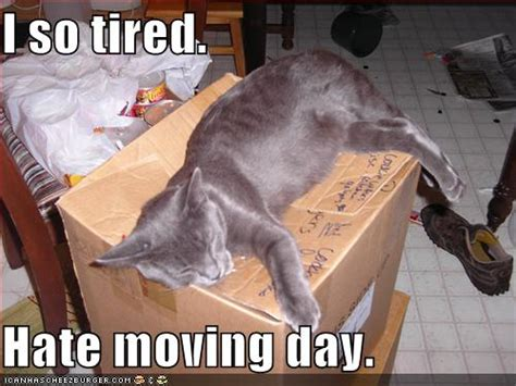 tired hate moving day cheezburger funny memes