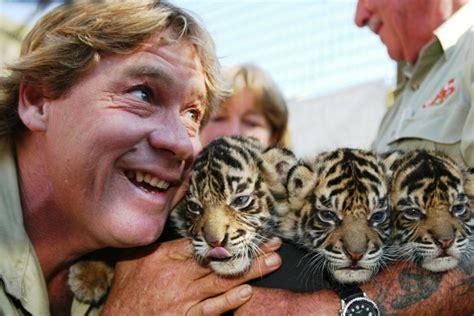 april tiger dad related keywords april tiger dad long