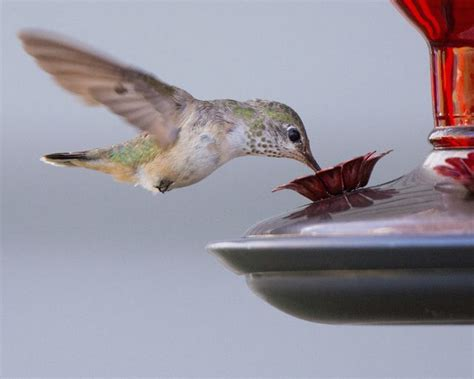 When To Put Up A Hummingbird Feeder In New Jersey