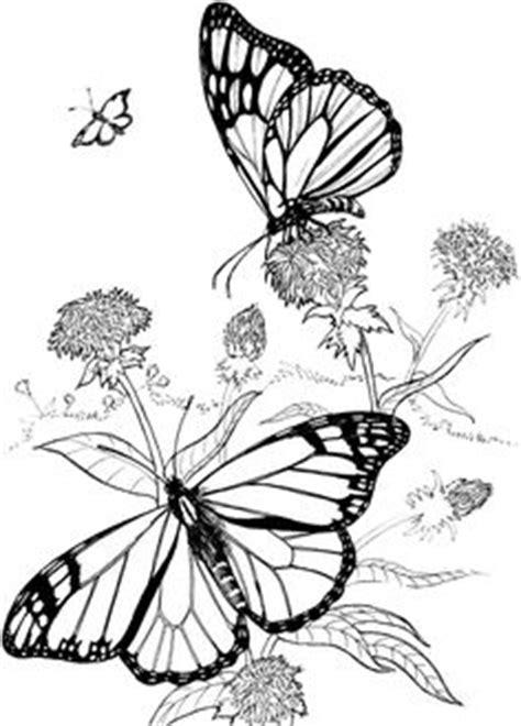 Poppy Flower Drawing   Poppy   ClipArt ETC   Poppy drawing