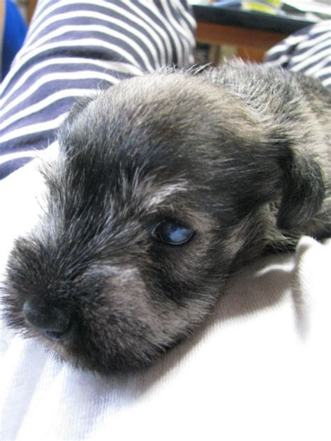 animal shelters  adoption centers  long island