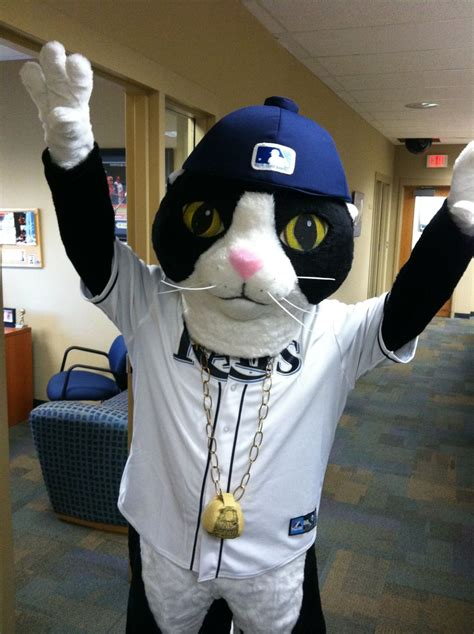 rays  debut dj kitty  teams newest mascot photo