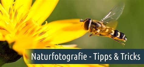 Naturfotografie  Tipps Und Tricks Für Bessere Aufnahmen